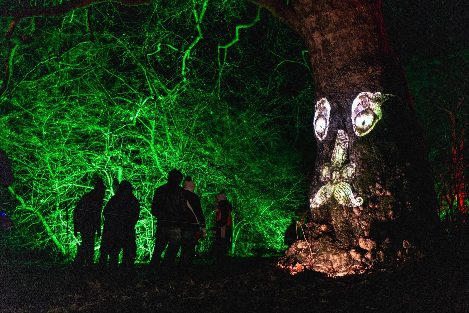 The grandfather tree at Westonbirt Enchanted Christmas